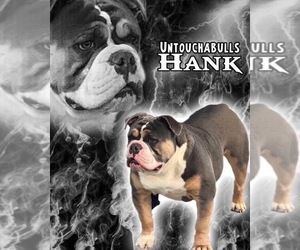 Father of the Olde English Bulldogge puppies born on 08/16/2020