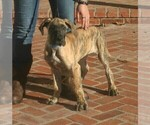 Image preview for Ad Listing. Nickname: Brindle Teal