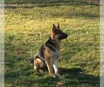 Small #551 German Shepherd Dog