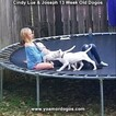 Small Photo #184 Dogo Argentino Puppy For Sale in PINEVILLE, MO, USA