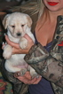 Labradoodle Puppy For Sale in LAKE ELSINORE, CA