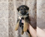 Image preview for Ad Listing. Nickname: GSD Puppies