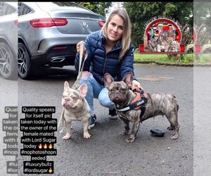 Father of the French Bulldog puppies born on 05/12/2019