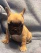 Small Dog Rescue Charleston Sc