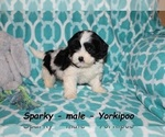 Image preview for Ad Listing. Nickname: Sparky