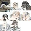 Great Pyredane Puppy For Sale in WALTERBORO, SC, USA