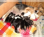 Image preview for Ad Listing. Nickname: Litter of 9