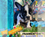 Image preview for Ad Listing. Nickname: FRANKIE
