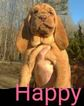 Bloodhound Puppy For Sale in TOCCOA, GA