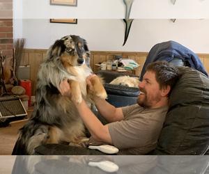 Father of the Australian Shepherd puppies born on 10/15/2020