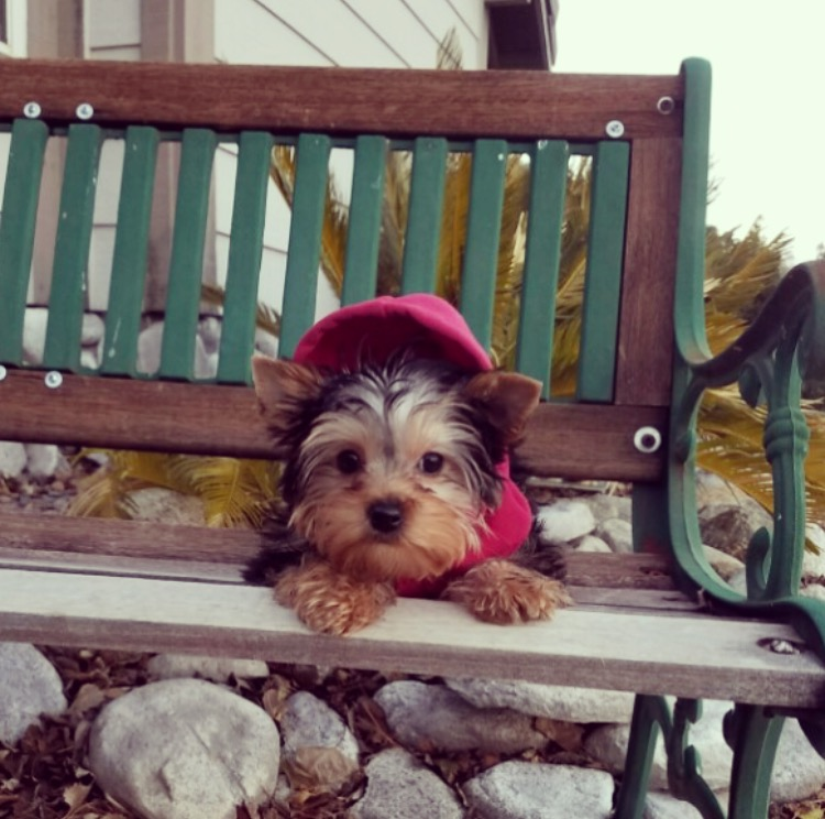 Small Dog Breeders In Los Angeles