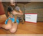 Small #5 Mastiff