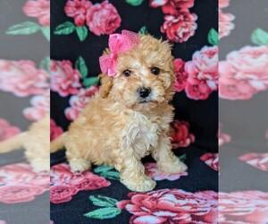 Cantel Dog for Adoption in BIRD IN HAND, Pennsylvania USA