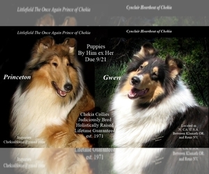 Collie Puppy for Sale in CANBY, California USA