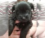 Puppy 3 Pom-A-Nauze