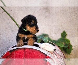 Airedale Terrier Puppy for sale in Kisela Voda, Kisela Voda, Macedonia