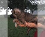 Small #48 German Shepherd Dog