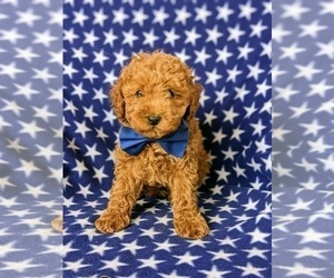 Cavapoo Puppy for sale in KIRKWOOD, PA, USA