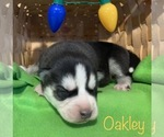 Image preview for Ad Listing. Nickname: Oakley