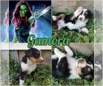 Image preview for Ad Listing. Nickname: Gamora
