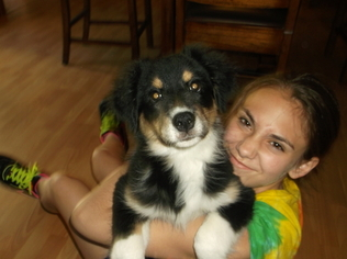 Australian Shepherd Puppy For Sale in FOSTER, RI
