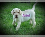 Image preview for Ad Listing. Nickname: Ariel