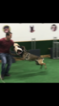 Belgian Malinois Puppy For Sale in HOMESTEAD, FL, USA