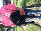 German Shepherd Dog Puppy For Sale in WILLIAMSPORT, OH,