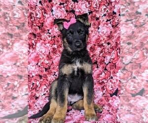 German Shepherd Dog Puppy for sale in LEOLA, PA, USA