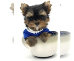 Image preview for Ad Listing. Nickname: Teacup boy