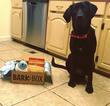 Small #2 Labrador Retriever Mix