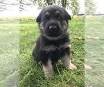 Small #25 German Shepherd Dog