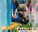 Image preview for Ad Listing. Nickname: MARLIN
