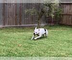 Small #37 Boxer