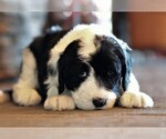Image preview for Ad Listing. Nickname: Puppy #62