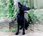 Small #19 German Shepherd Dog Mix