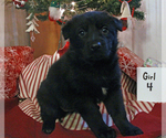 Image preview for Ad Listing. Nickname: Baby Onyx