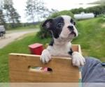 Image preview for Ad Listing. Nickname: Nyla