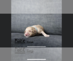 Image preview for Ad Listing. Nickname: Mazie
