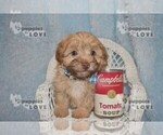 Image preview for Ad Listing. Nickname: COOPER