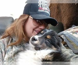 Australian Shepherd Puppy for sale in FLORENCE, CO, USA
