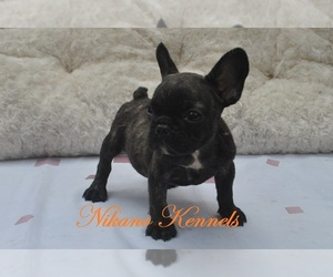 French Bulldog Puppy for sale in Pasay, Metro Manila, Philippines