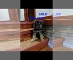 Small #5 German Shepherd Dog