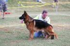 German Shepherd Dog Puppy For Sale in CARTERSVILLE, GA, USA