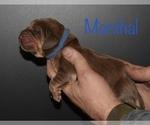 Small #5 Bloodhound