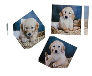 Golden Retriever Puppy for sale in PUEBLO WEST, CO, USA
