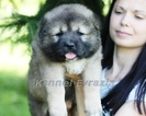 Caucasian puppy FEMALE