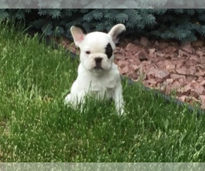 French Bulldog Puppy for sale in EMERALD, WI, USA