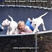 Small Photo #187 Dogo Argentino Puppy For Sale in PINEVILLE, MO, USA