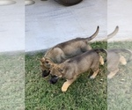 Small #33 German Shepherd Dog